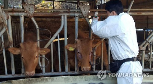 Fifth foot-and-mouth disease case confirmed in S. Korea