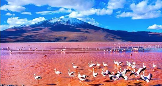 Red Lagoon filled with Andean flamingos